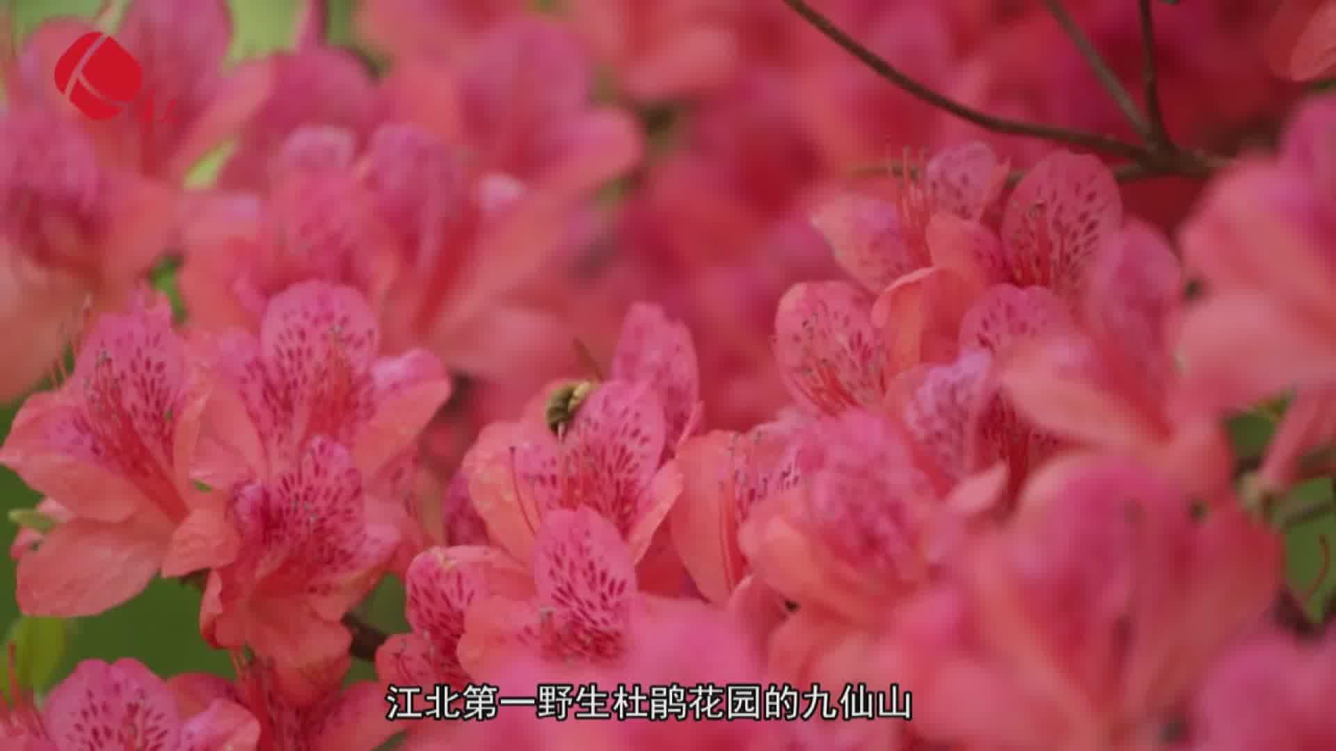 《为家乡推介》日照市委宣传部副部长吴继安