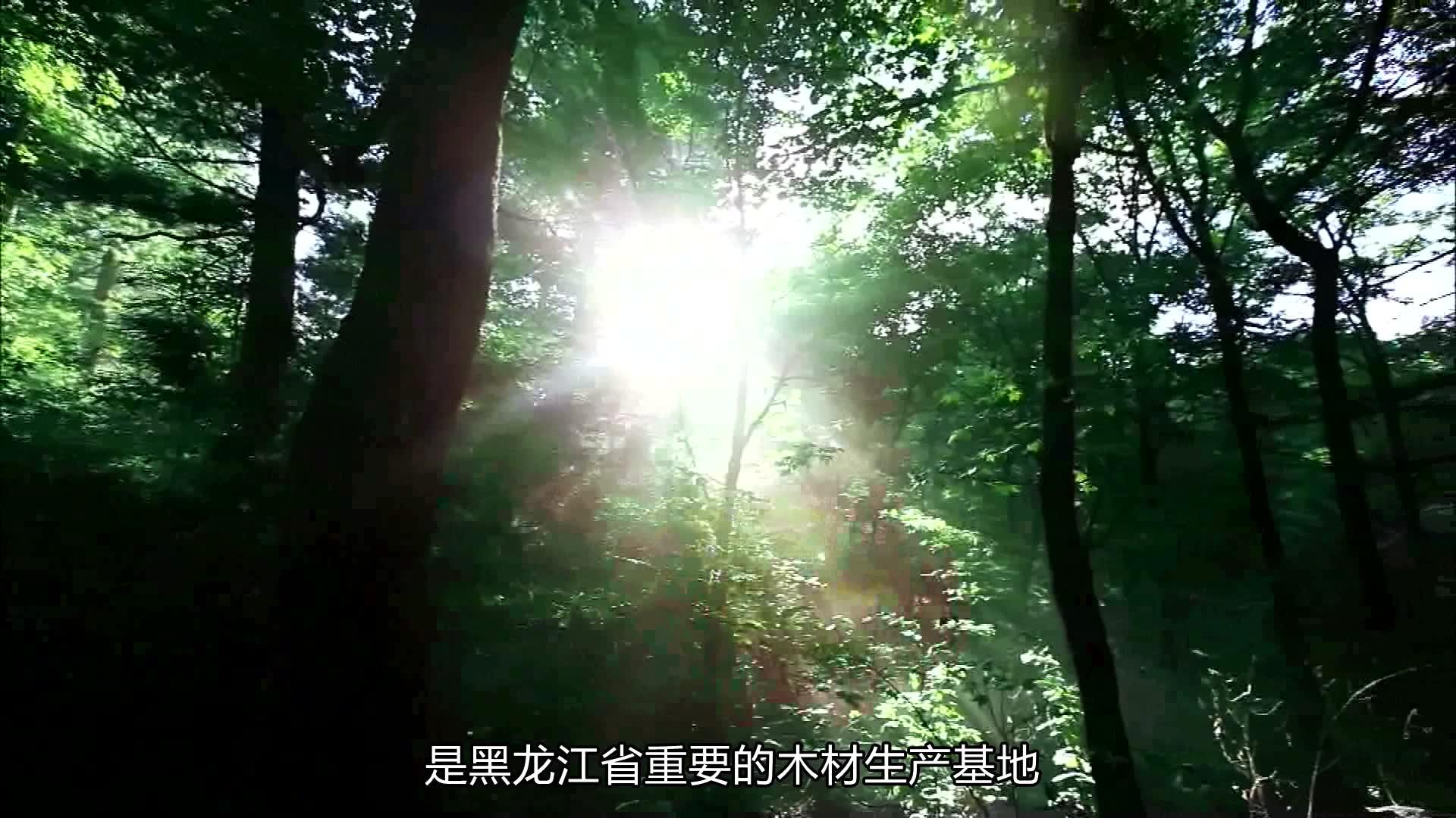 《为家乡推介》五大连池市委常委宣传部长刘艳霞