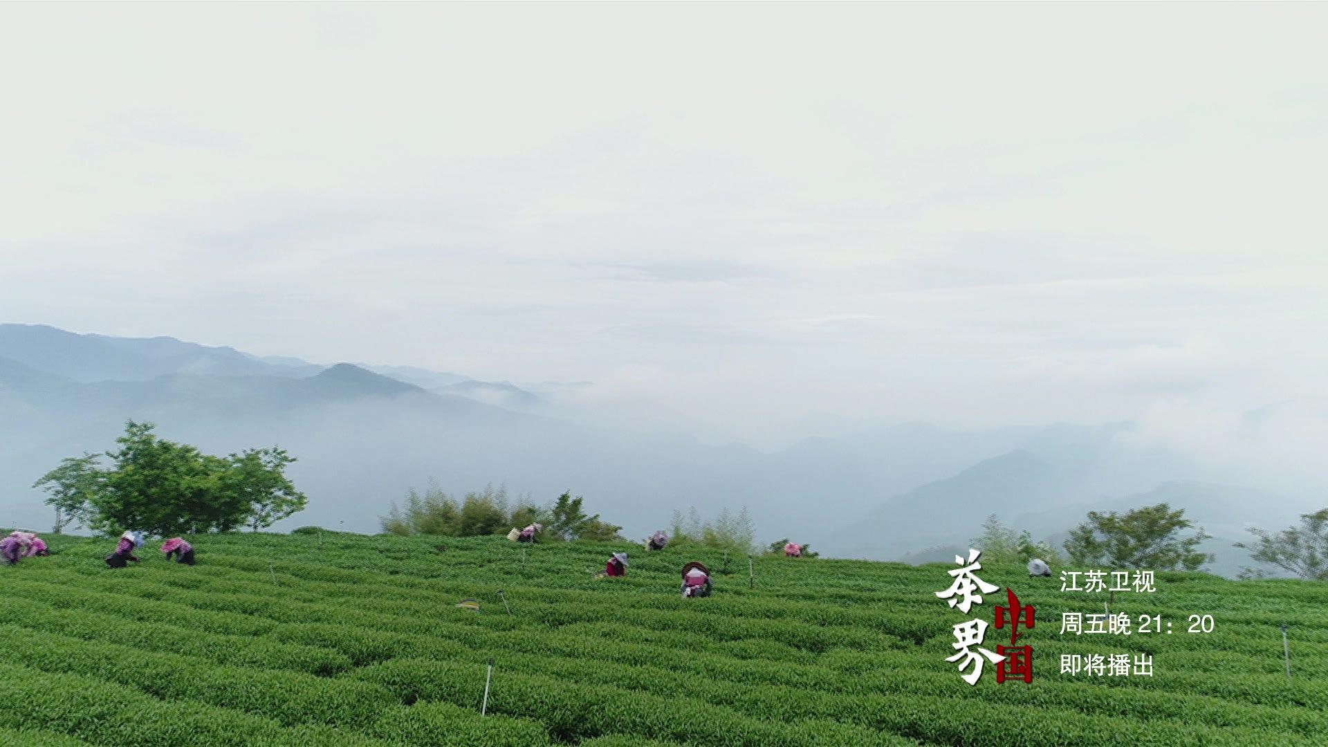 《茶界中国》制茶版